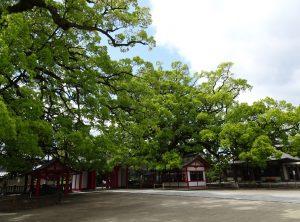 境内 楠木